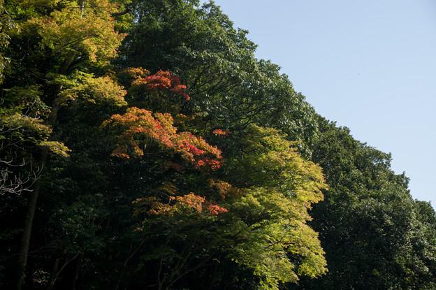 保津川下り~かろうじて見つけた紅葉