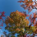 日本庭園の紅葉(2_3)