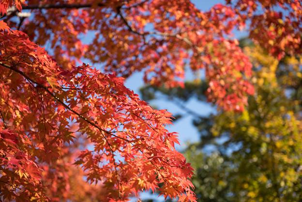日本庭園の紅葉(2_5)