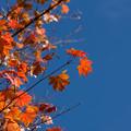 日本庭園の紅葉(6_4)