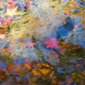 日本庭園の紅葉(7_5)