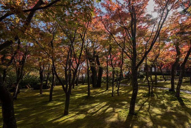 箱根美術館_庭園の様子3