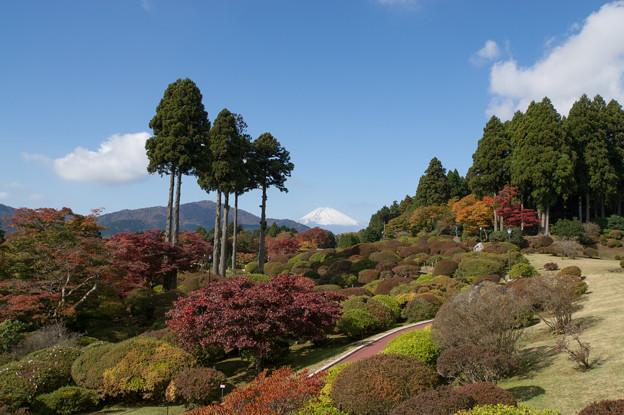 「山のホテル」は庭園がすばらしいのです。
