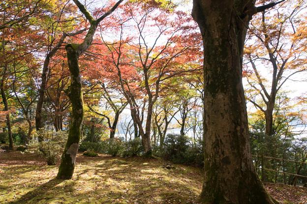芦ノ湖の紅葉も進んでました(2)