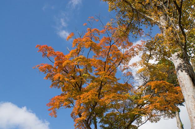 芦ノ湖の紅葉も進んでました(3)