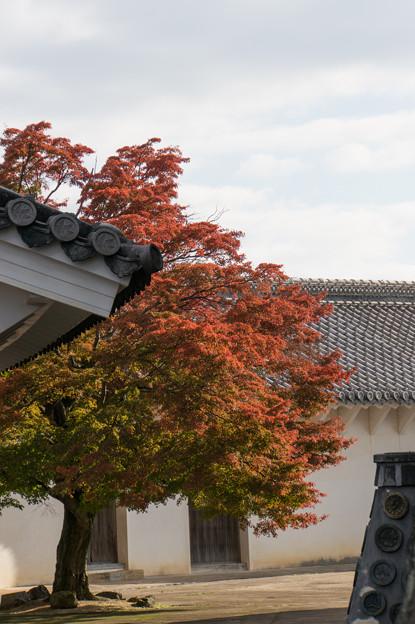 姫路城【19_ほの門を入った場所から見た紅葉】