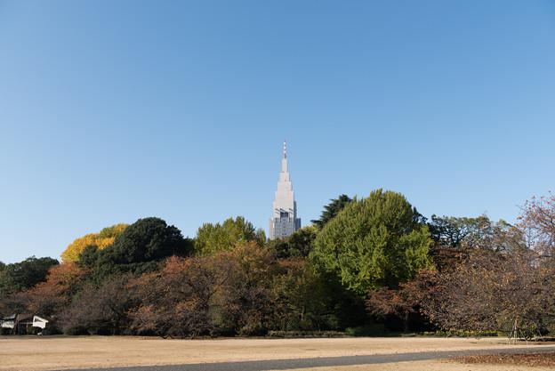 この時季の新宿御苑の眺め
