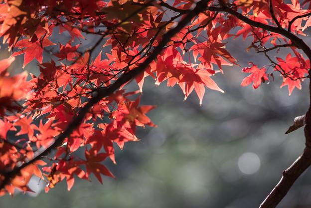 新宿御苑【上の池の紅葉】3