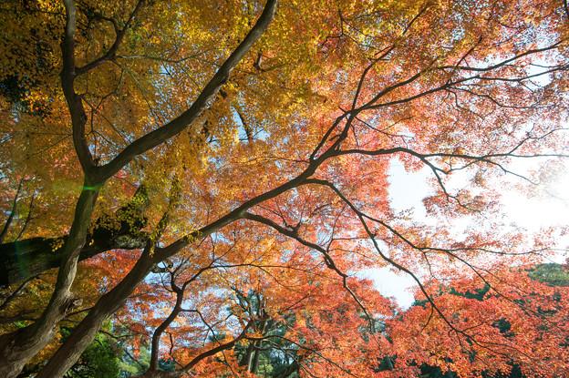 小石川後楽園【深山紅葉を楽しむ】2_2