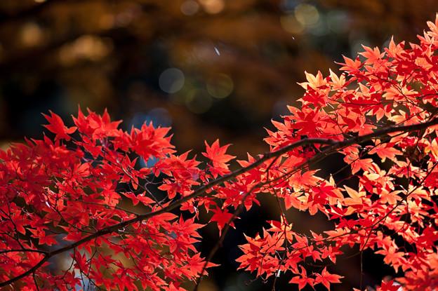 【六義園の紅葉】1_4