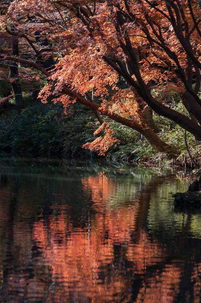 【六義園の紅葉】3_2
