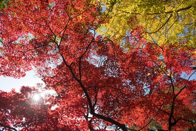 【六義園の紅葉】3_4
