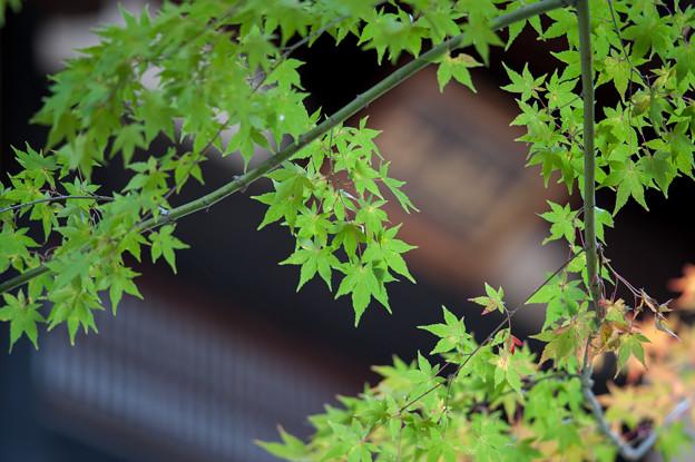【九品仏浄真寺の紅葉】2_3