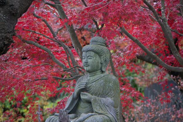 鎌倉【長谷寺の紅葉】1
