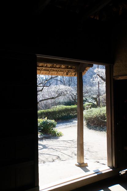 薬師池公園【旧永井家屋敷内から見た梅林】