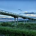 写真: 蓬莱橋 (1)
