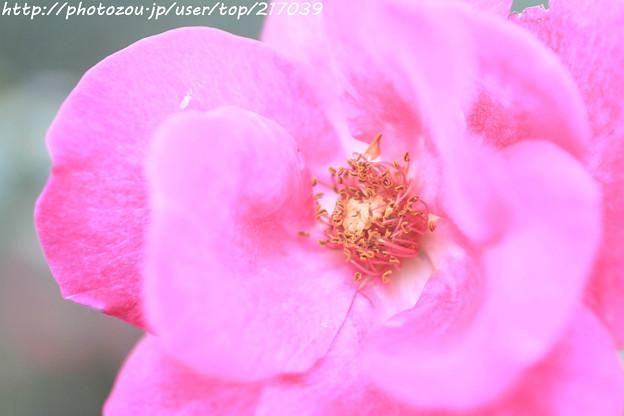 IMG_9512ばら庭園・ニュース