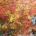 Photos: IMG_9671圓成寺・紅葉
