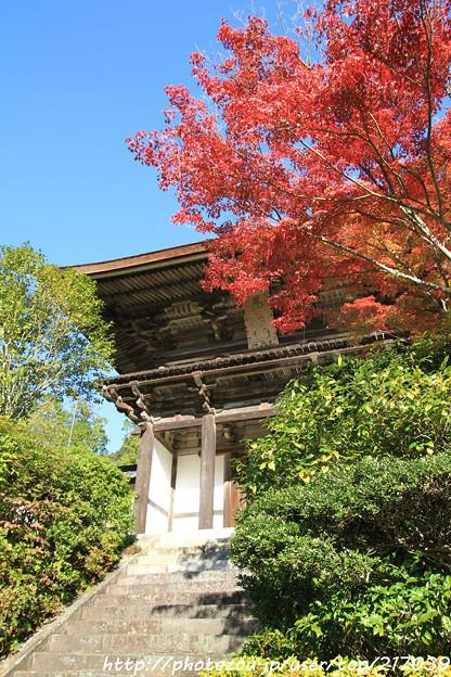 IMG_9677圓成寺・紅葉と楼門(重要文化財)