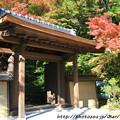 Photos: IMG_9686圓成寺