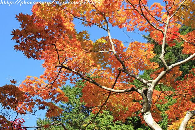 Photos: IMG_9714圓成寺・紅葉