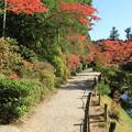 Photos: IMG_9721圓成寺