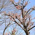 写真: IMG_1880大阪城公園・梅林・傅粉