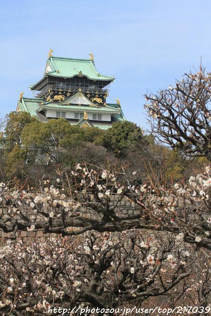 IMG_2047大阪城公園・梅林・大阪城天守閣と梅