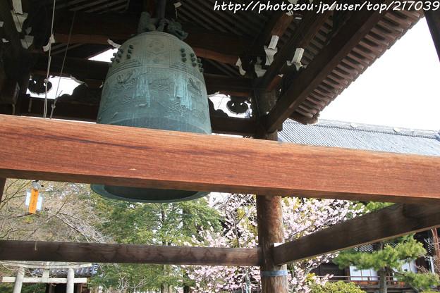 IMG_2521百万遍知恩寺・鐘楼(重要文化財)と富士桜