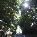 写真: 泉涌寺 PA160549