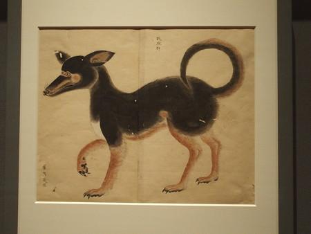 琉球狆 博物館写製図 P3051126