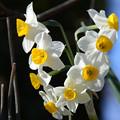Photos: 鮮やかに咲く