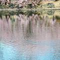 水面に映える桜の波紋