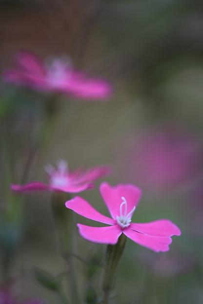武蔵丘陵森林公園にて