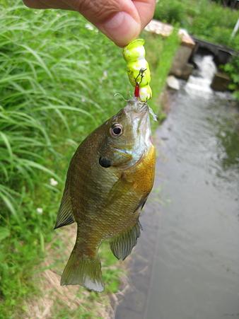 20110527 O池