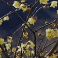 写真: 山里に咲く