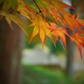 紅葉と西山荘