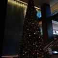 OOTEMORI Christmas tree