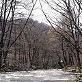 写真: 奥入瀬の流れ