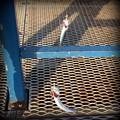 釣られまくるカタクチイワシの皆さん@本牧海釣り施設