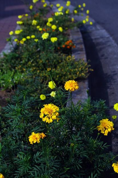 写真: 20100801_160058