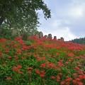ヒガンノ丘