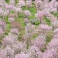 Photos: Spring Fever