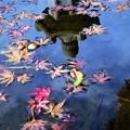 写真: 池の紅葉