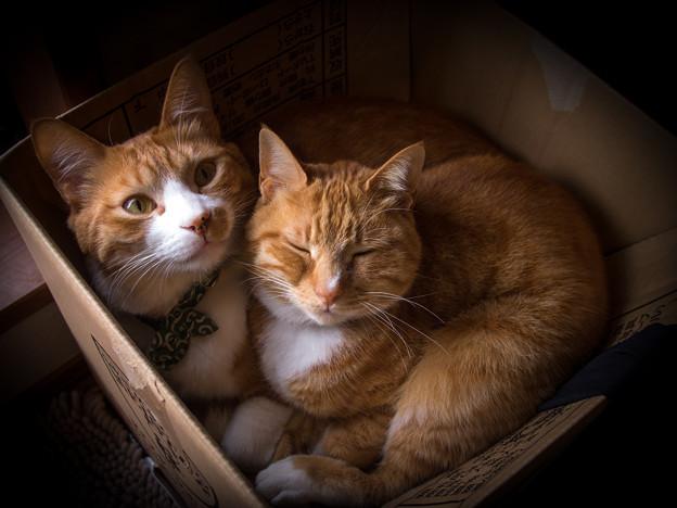猫の詰め合わせ