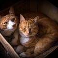 写真: 猫の詰め合わせ