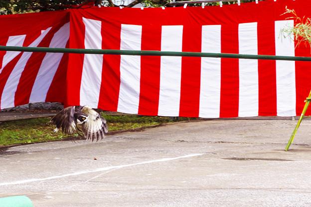 フクロウの飛翔