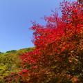Photos: 青空と紅葉