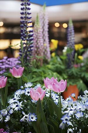 ベルボンブースの花畑
