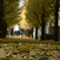 写真: 黄色い道